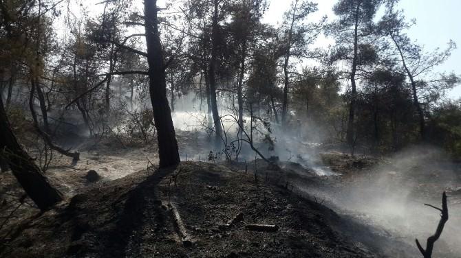Osmaneli'de Orman Yangını
