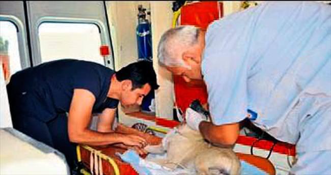 Yaralanan köpeğe Büyükşehir şefkati