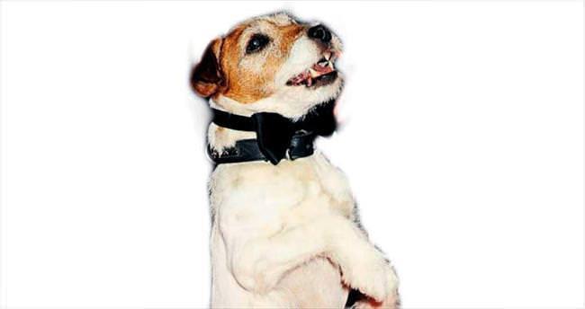 Hollywood'un en sevimli köpeği öldü