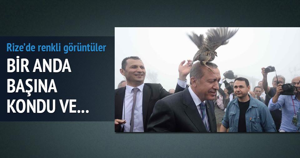 Erdoğan'ın başına keklik kuşu kondu renkli görüntüler oluştu