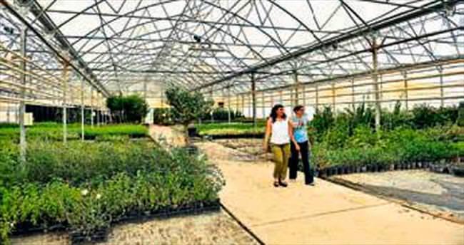 Antalya Organize Sanayi çiçek açtı