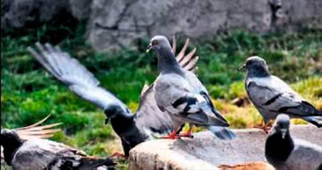 Kuşlara yemlik ve suluk yapılıyor