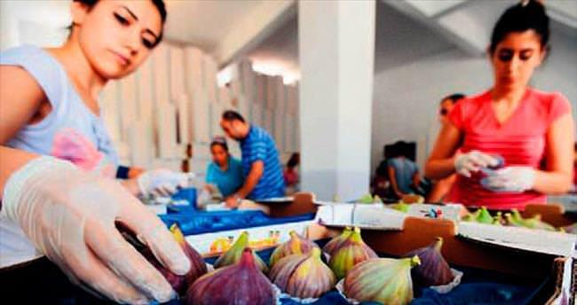 Bursa Siyahı'nın ihracat yolculuğu sancılı başladı