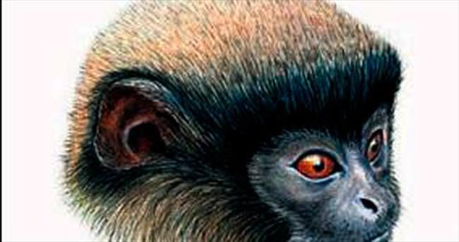 Peru'da yeni maymun türü