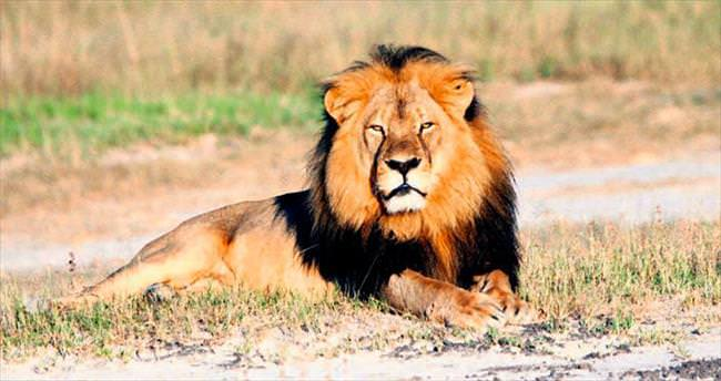 THY'den 'Cecil' hassasiyeti