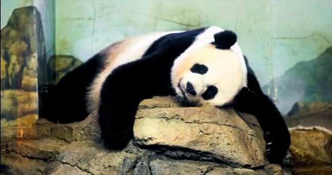 Mei Şiang, 5 saat arayla ikiz doğurdu