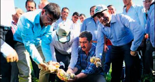 İyi tarım patates üretimini artırdı
