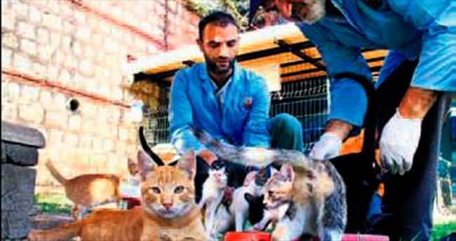 Kağıthane'de sokak hayvanlarına özel ilgi