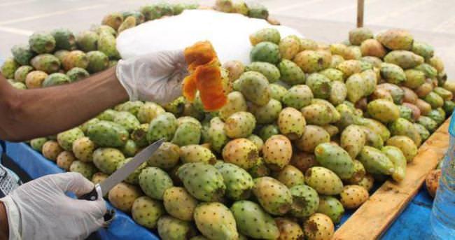 Dikenli incirin fazlası zarar