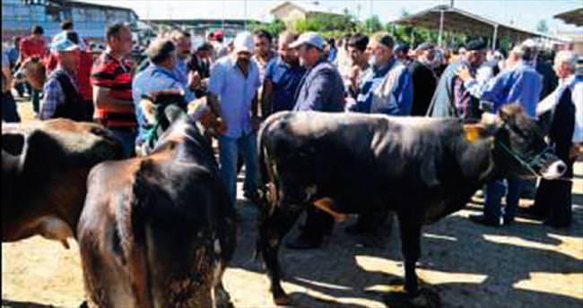 Hayvan pazarları hareketleniyor