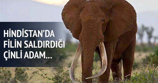 Fil saldırısına uğrayan Çinli..