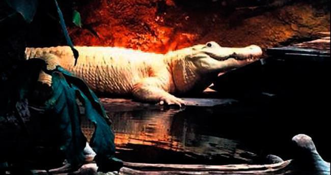 Ünlü albino timsah öldü