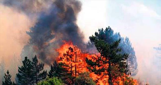 Bolu'da 8 hektarlık orman kül oldu
