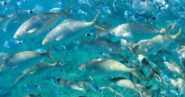 Deniz canlılarının sayısı yarı yarıya azaldı