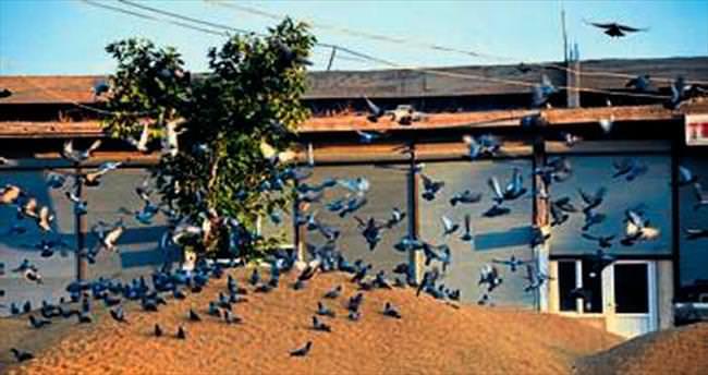 Gaspçı kuşların mekanı zahireciler