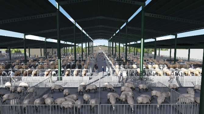 İzmit Belediyesi'nden Hayvan Satış Yeri İhalesi Yapıldı
