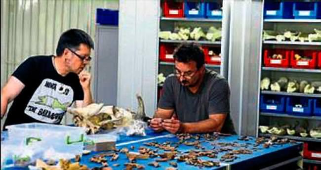 Kaybolan türler Efes'te bulunuyor