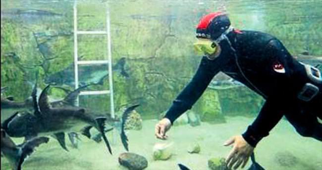 Balıklara 'Yeşil Diyet'