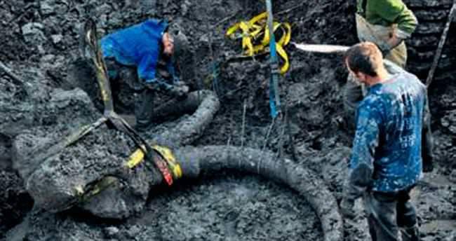Tarladan çıkan 15 bin yıllık fosili bağışladı