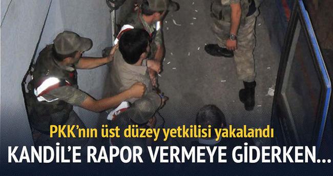 Kandil'e rapor götüren o PKK'lı yakalandı