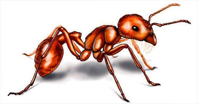 Karıncalar bizi kandırdı
