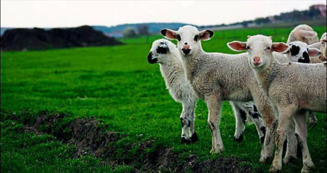 Hayvancılıkta lider İzmir