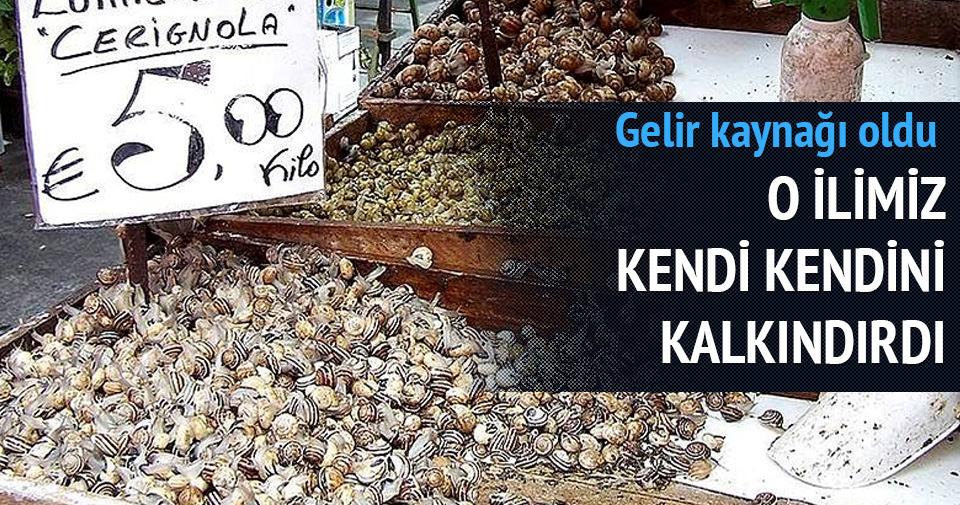 Sinop'tan Uzak Doğu'ya deniz salyongozu ihracatı