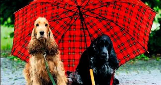Köpekler ilk Orta Asya'da evcilleşti