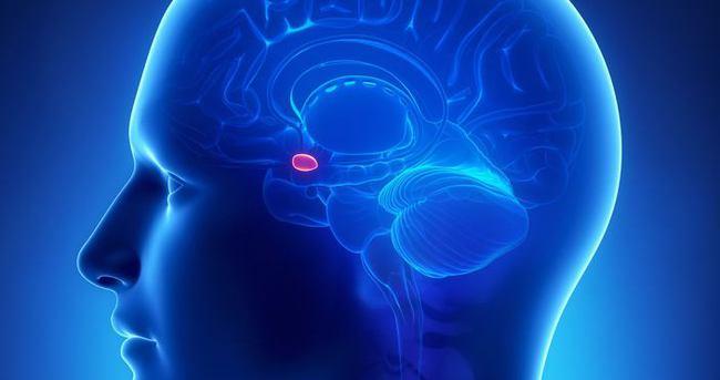 Korku anında 'amigdala' devreye giriyor