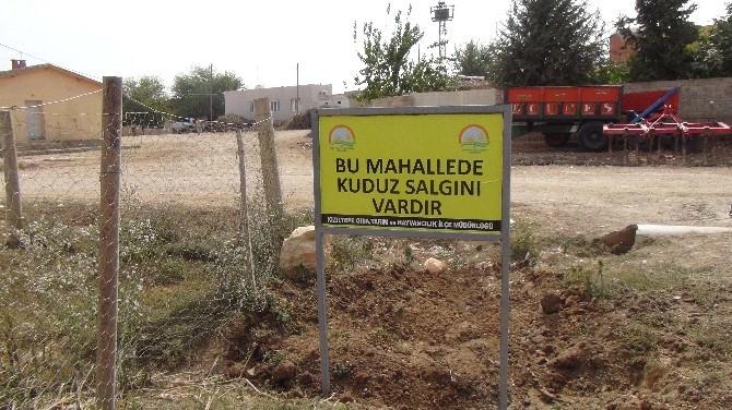 Kızıltepe'de Kuduz Karantinası