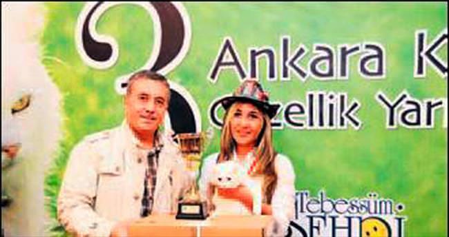 Ankara kedileri kıyasıya yarışacak