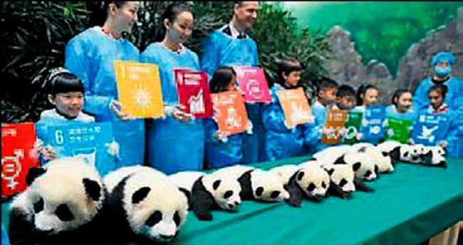İkiz pandalar ilk kez görüntülendi