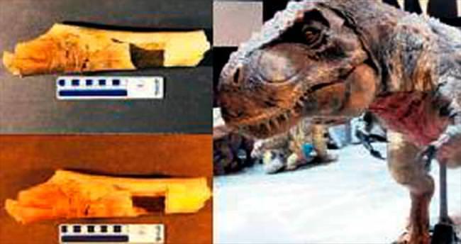 T.rex'ler birbirini yiyiyormuş...