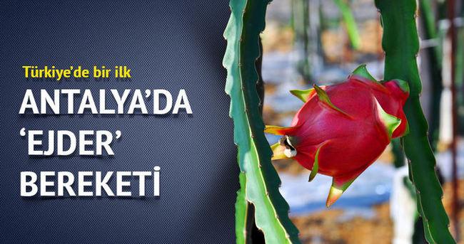 Antalya Gazipaşa'da ilk kez ejder meyvesi yetiştirildi