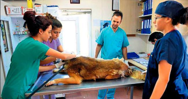 Sokak hayvanlarının en şanslıları Osmangazi'de