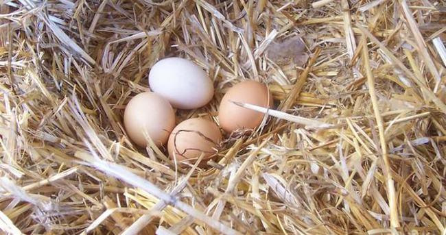 Gerçek Köy Yumurtası Nasıl Anlaşılır En Son Haber