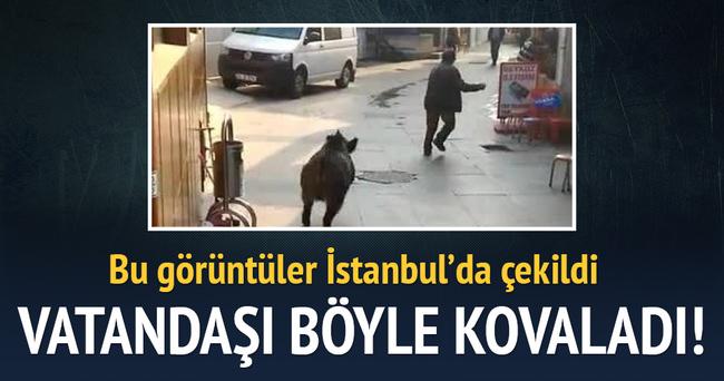 Domuz vatandaşı kovaladı: Burası İstanbul