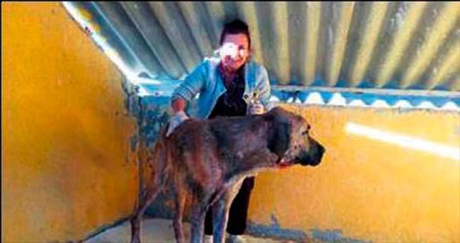 Uyuz olan köpeği elleriyle tedavi etti