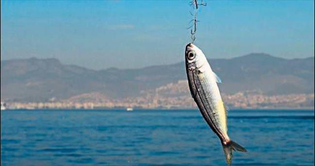 Balık yasağı kalkabilir