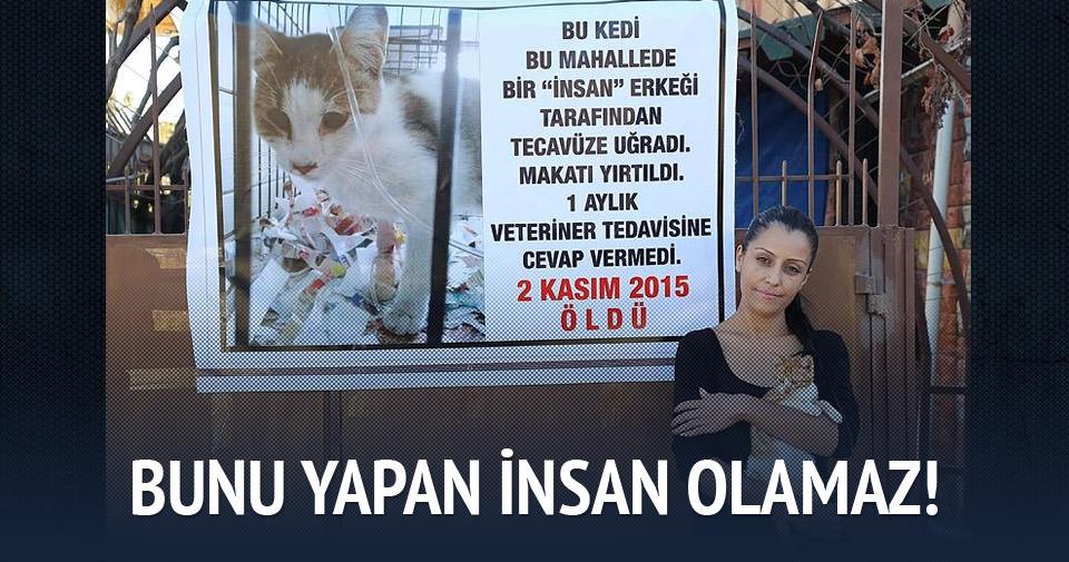 Mersin'de kediye tecavüz