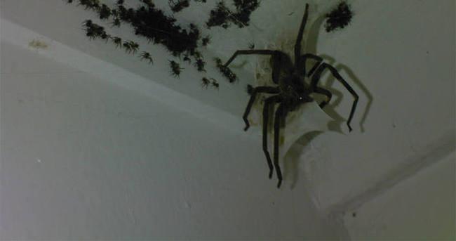 Örümcek öldürüyordu, karısını öldürüyor sandılar