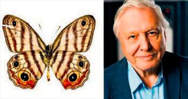 Ünlü belgeselcinin adı kelebeğe verildi