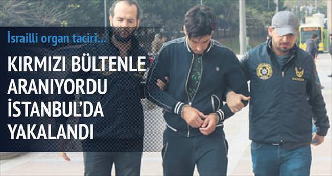 İsrailli organ taciri İstanbul'da tutuklandı