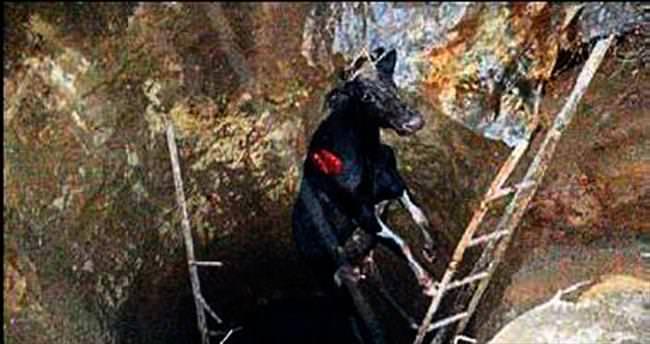 Kuyuya düşen ineği itfaiye ekibi kurtardı