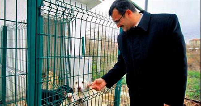 Sokak hayvanlarına sağlık taraması