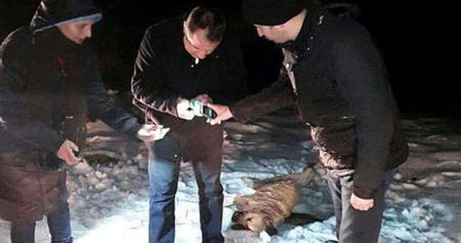 Kastamonu'da 9 köpek ölü olarak bulundu