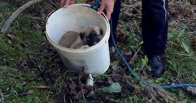 Çukura düşen yavru köpekler kurtarıldı