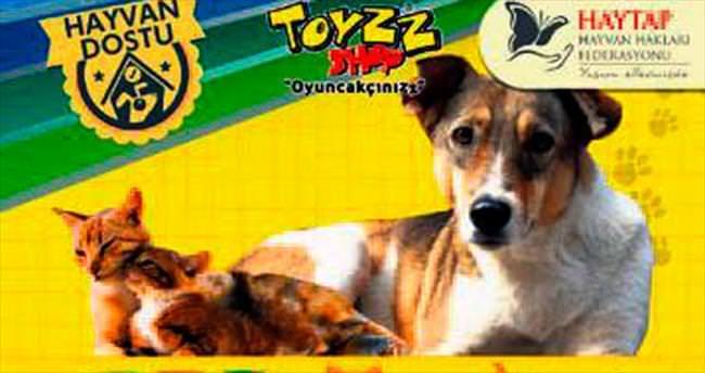 Sahipsiz hayvanlar için kampanya yaptılar