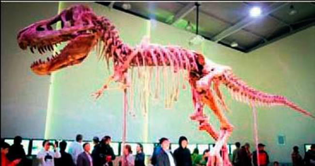 Dinozor fosili başına bela oldu