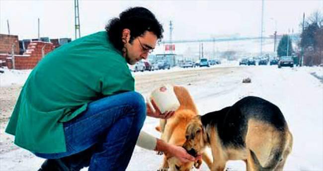 Büyükşehir'den sokak hayvanlarına gıda desteği
